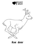 Roe deer colouring in.jpg