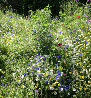 CALL TO REWILD VERGES TO HELP THE CLIMATE EMERGENCY