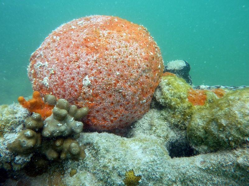 An Artificial Reef