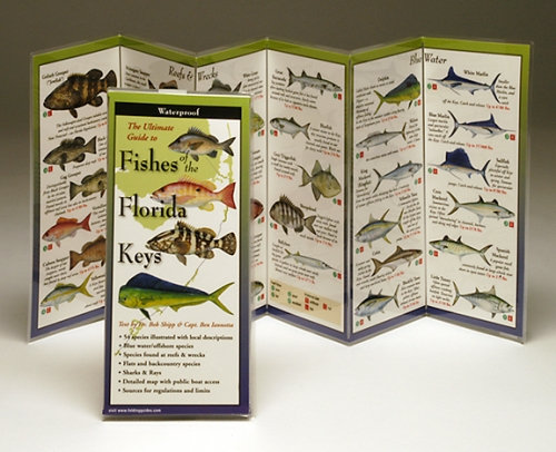 FISHES OF THE FLORIDA KEYS – LAMINATED GUIDE