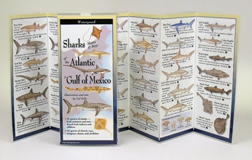 SHARKS OF THE ATLANTIC & GULF OF MEXICO