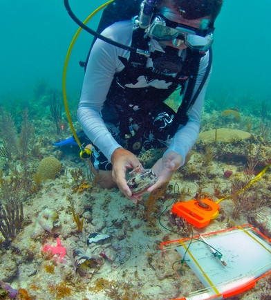 Diver with Artifact