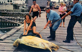Tourists posing with sea turtles at the Turtle Kraals, ca. 1960.