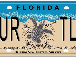 Key West Turtle Museum Awarded Grant