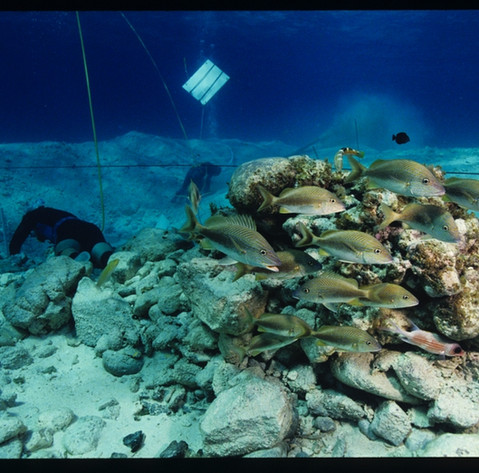 Stone Ballast Fish Haven