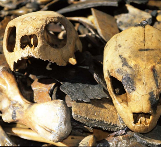 Sea Turtle Skulls and Other Bones