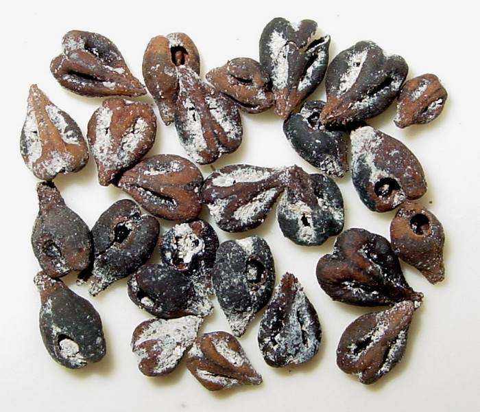 Grape Seeds