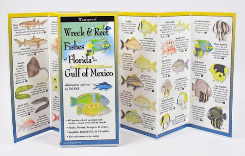 WRECK & REEF FISHES OF FL & THE GULF OF MEXICO