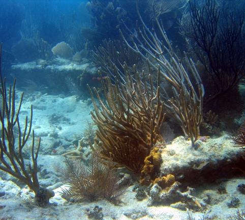 Iron Ballast Ingot on Reef