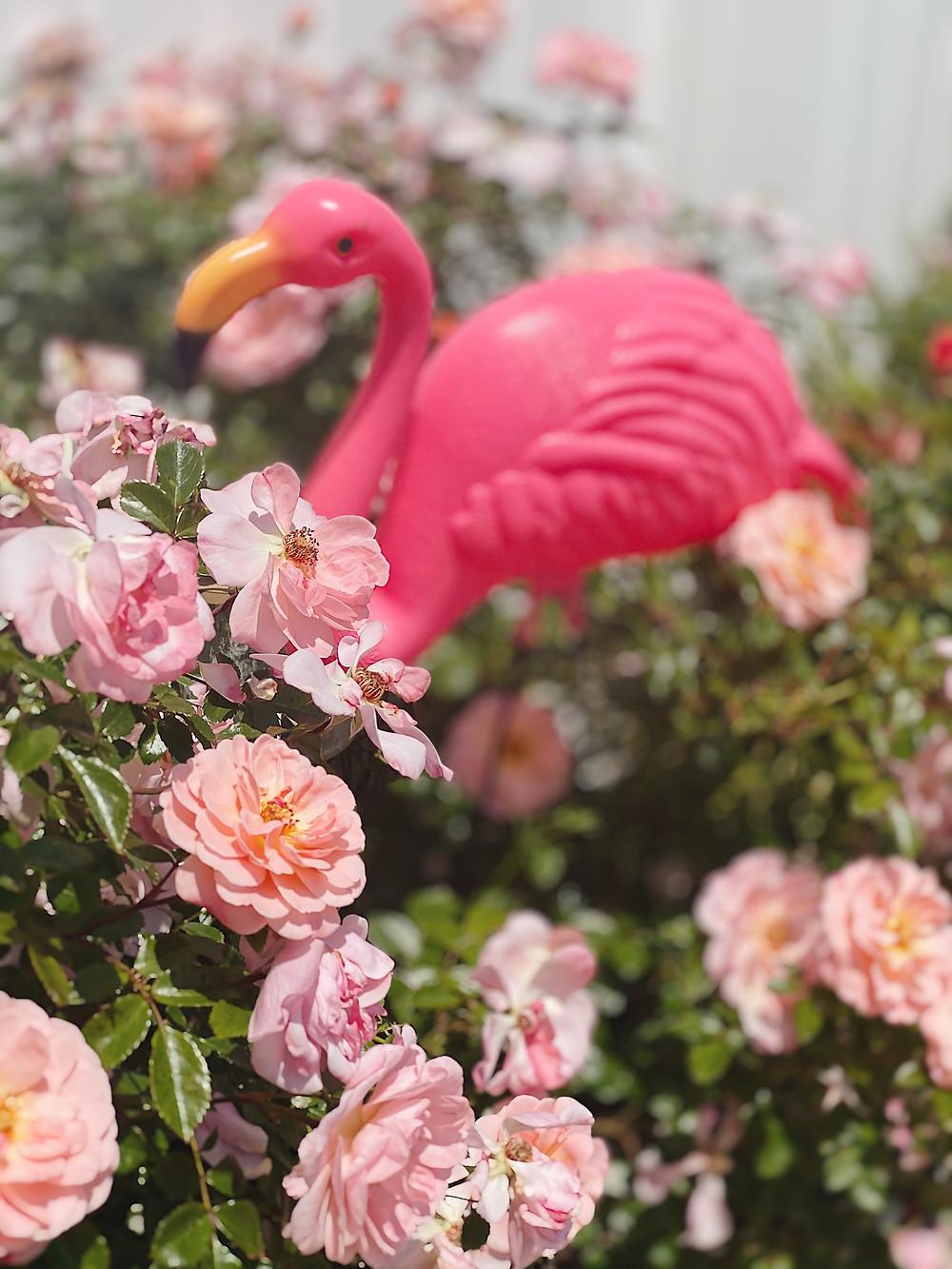 Flamingo Yard Ornament from Amazon