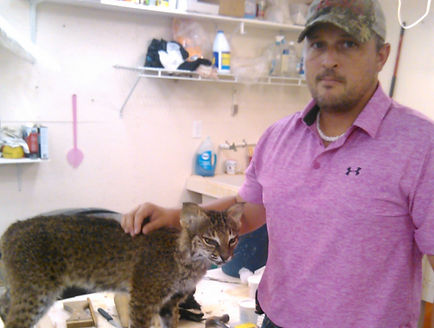 Jason with Mounted Bobcat