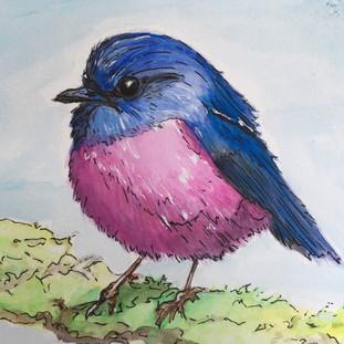 Austrailian Pink Robin