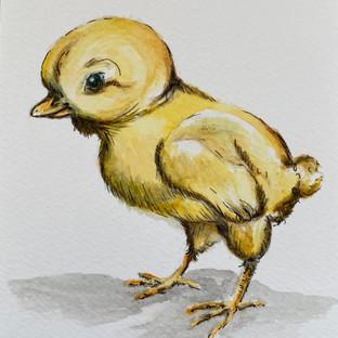Lil Chickadee