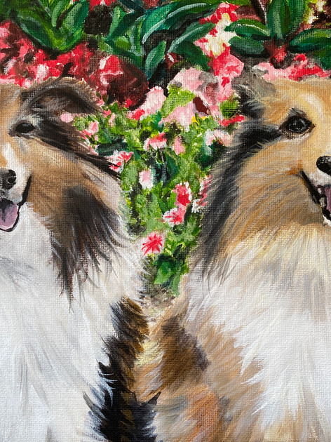 Beautiful Shelties