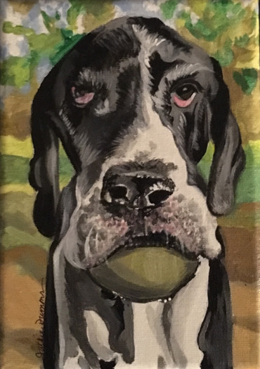 Millie the Great Dane