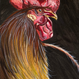 Mr. Rooster on Black