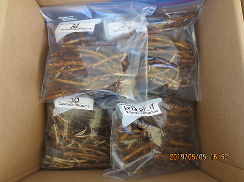Order rhizomes for $4 each - (package of 5 rhizomes)