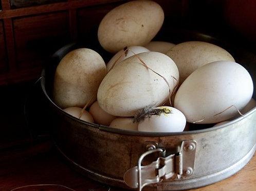Яйца гусиные -- свободный выгул (1 ШТ)