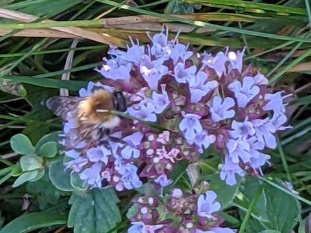 A walk from Holywell to Beachy Head. 25.08.21. Wild Flowers, Butterflies, LandArt and Winchats.