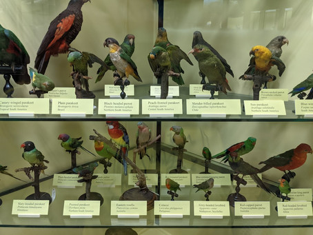Tring Natural History Museum & College Lake NR: Taxidermy, Ivy Bees & a Red Kite 22.09.21