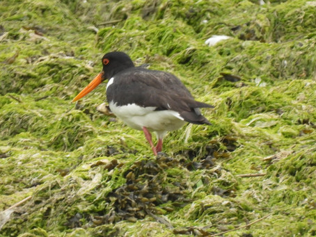 Chichester to West Wittering (Chichester Harbour/The Manhood Peninsular) 11.06.21