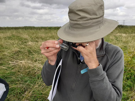 On Bumblebee Surveying: values, meaning, purpose and pleasure. Dungeness 01.09.21.