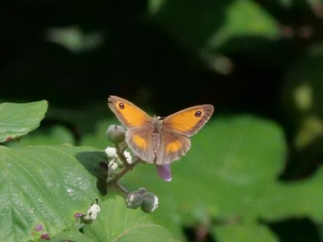 Curiosity, Beginners' Mind, Flow, Butterflies and Well-being. Friston Forrest 04.08.21
