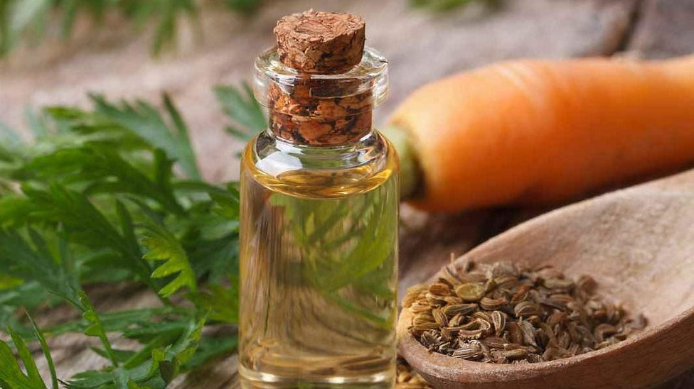 carrot-seed-essential-oil-1170x600.jpg