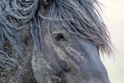 Wild Horses 22 2017.07.JPG