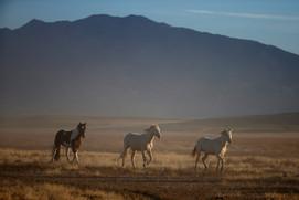 Wild Horses 6 2016.10.12.jpg
