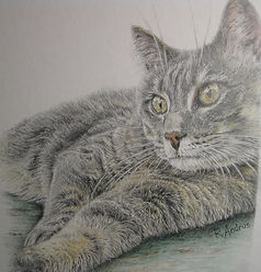 beautifully detailed pet portrait - cat