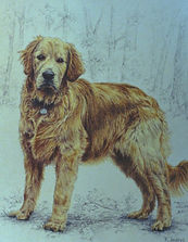beautifully detailed pet portrait in Canandaigua