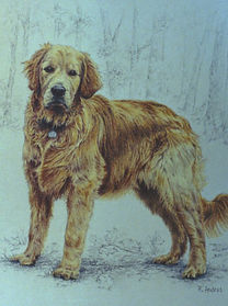 Golden Retriever dog - detailed pet portrait