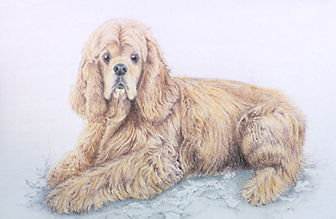 Colored Pencil portrait of Spaniel dog