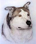 Finger Lakes Pet Memorials & Portraits