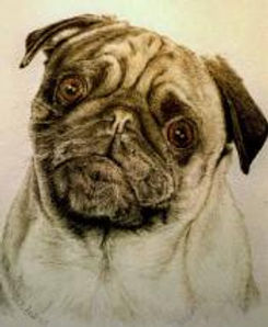 beautifully detailed animal pet portrait - pug dog