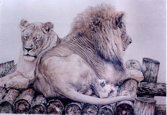 Colored Pencil drawing of Lions
