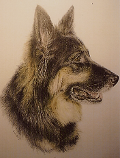 Pet Portraits, Memorials, Drawings, Wall Murals Rochester NY Region