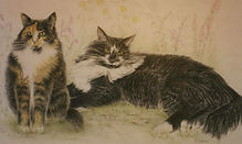 Colred Pencil Drawing of long-haired cats