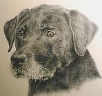 Canandaigua NY Pet Memorials & Portraits