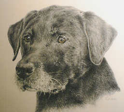 beautifully detailed pet portrait - dog