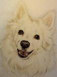 Rochester NY Pet Memorials & Portraits
