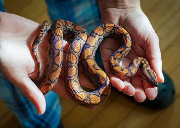 Playing with snakes inside where it's ni