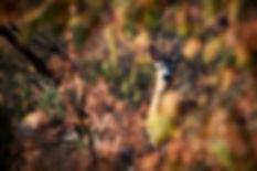 pexels-photo-2570170 (1).jpeg