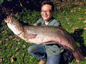 SnakeHead Fishing in Taipei