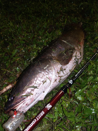 SnakeHead Fishing in Taipei