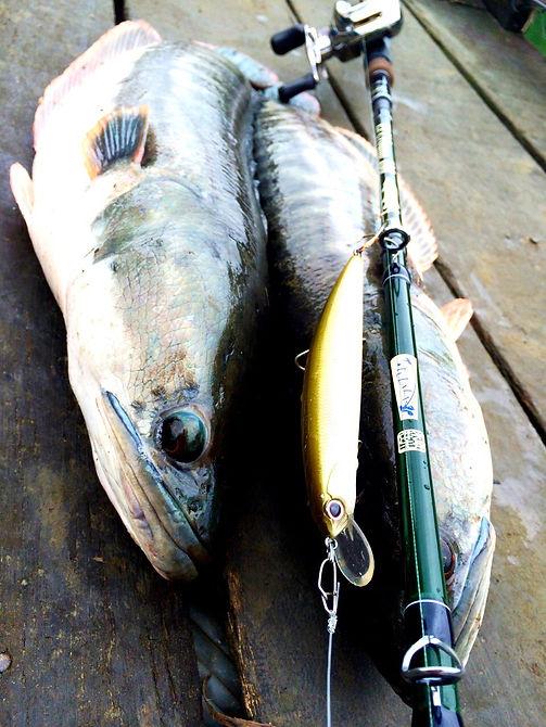 fishing in Taiwan / Snake head fishing in Taiwan / tulala eu 180