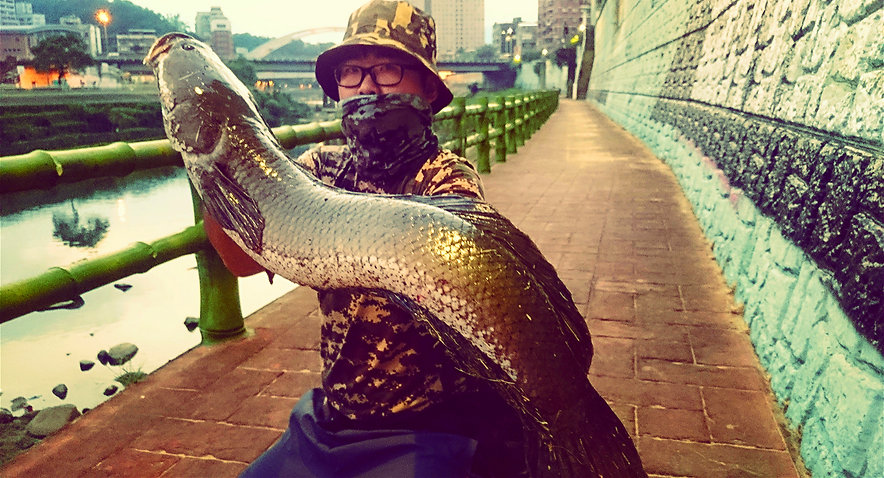 snak head fishing Taipei Taiwan / 臺北 鮕呆