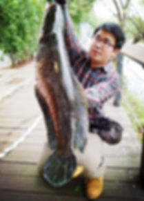snak head fishing Taipei Taiwan / 臺北 鮕呆