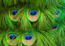 Zoo texture 2.jpg